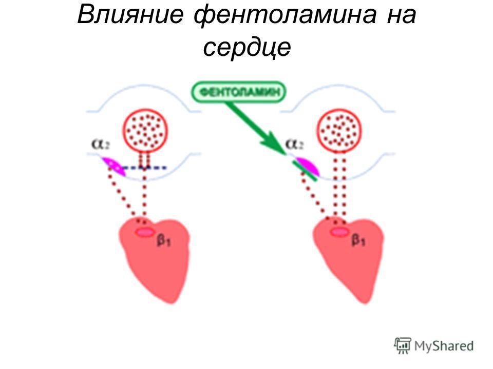 Влияние фентоламина на сердце