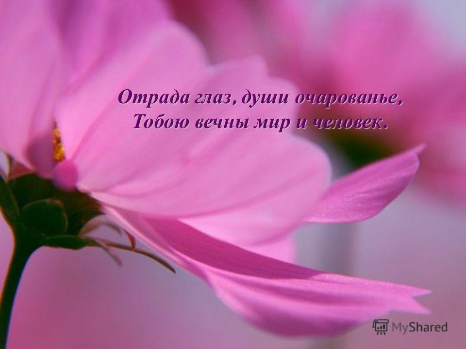 Отрада глаз, души очарованье, Тобою вечны мир и человек.