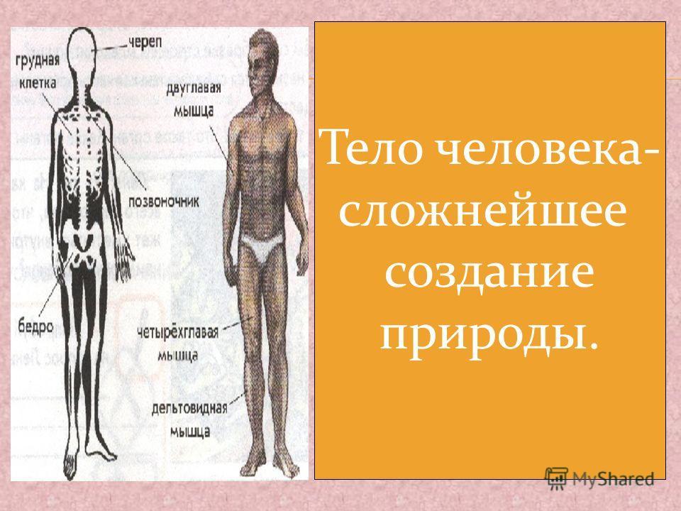 Тело человека- сложнейшее создание природы.