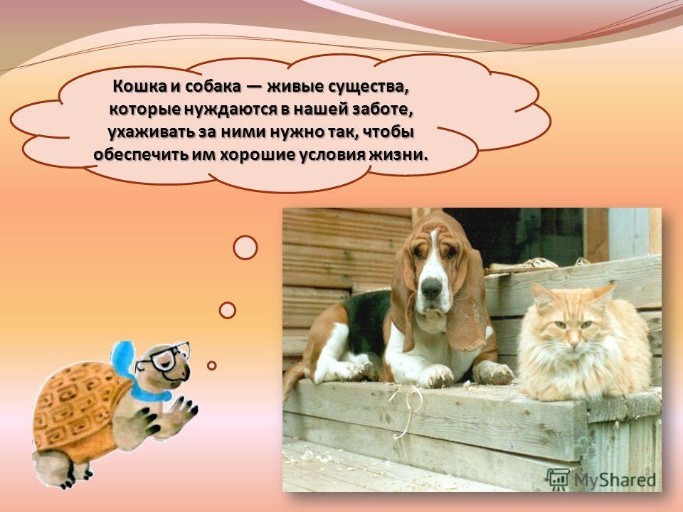 Кошка и собака живые существа, которые нуждаются в нашей заботе, ухаживать за ними нужно так, чтобы обеспечить им хорошие условия жизни.