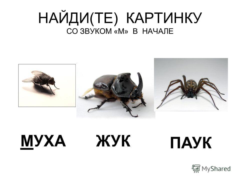 Звук жук скачать бесплатно