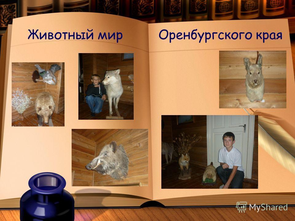Животный мир Оренбургского края