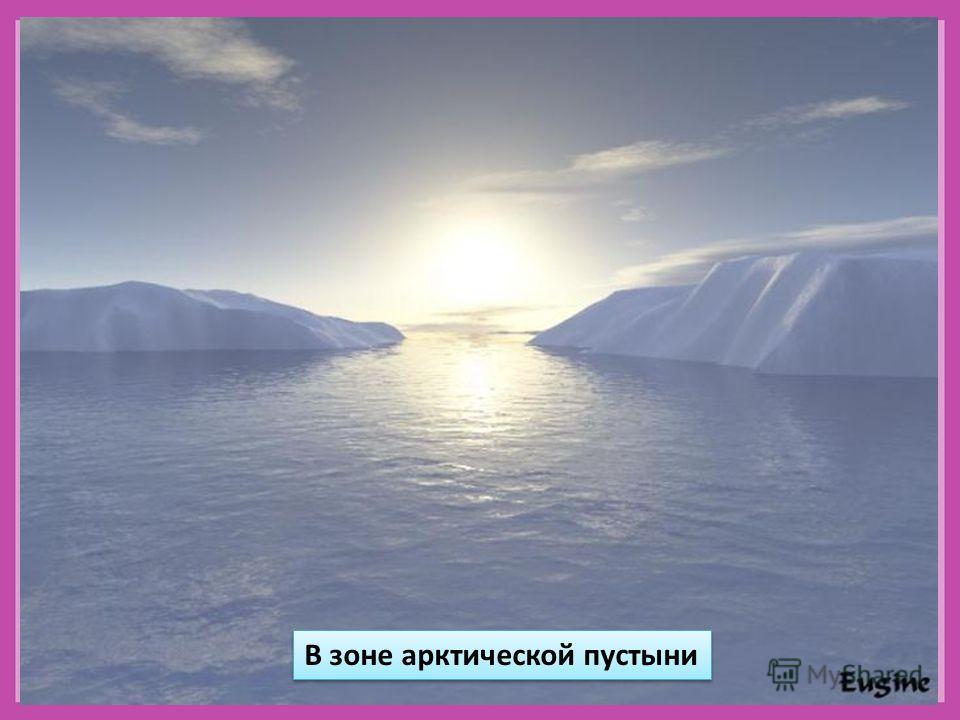 В зоне арктической пустыни