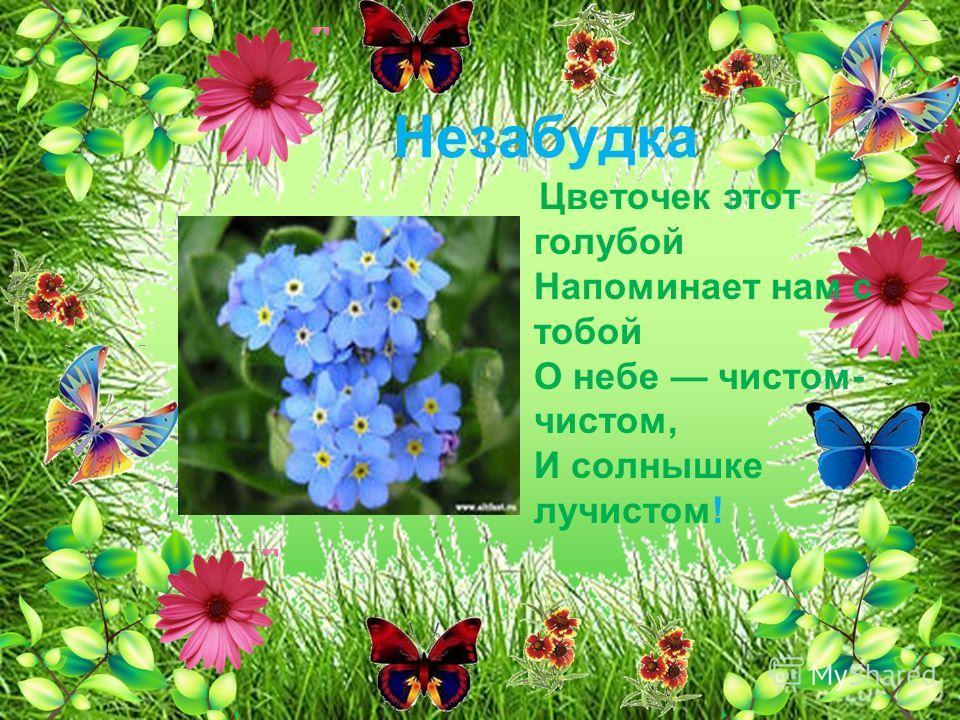 Незабудка Цветочек этот голубой Напоминает нам с тобой О небе чистом- чистом, И солнышке лучистом!