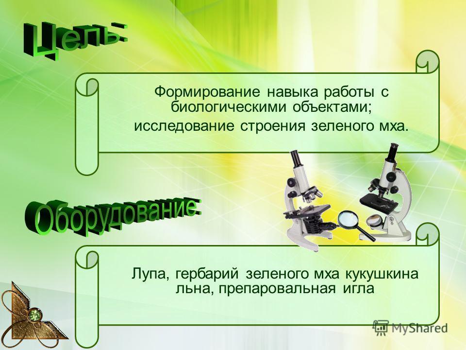 Лупа, гербарий зеленого мха кукушкина льна, препаровальная игла Формирование навыка работы с биологическими объектами; исследование строения зеленого мха.