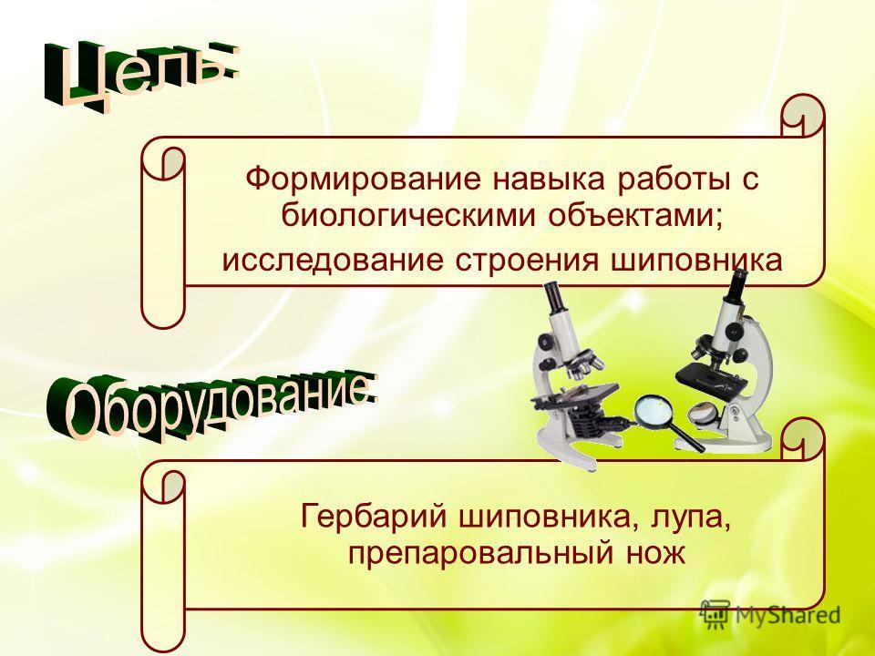 Формирование навыка работы с биологическими объектами; исследование строения шиповника Гербарий шиповника, лупа, препаровальный нож