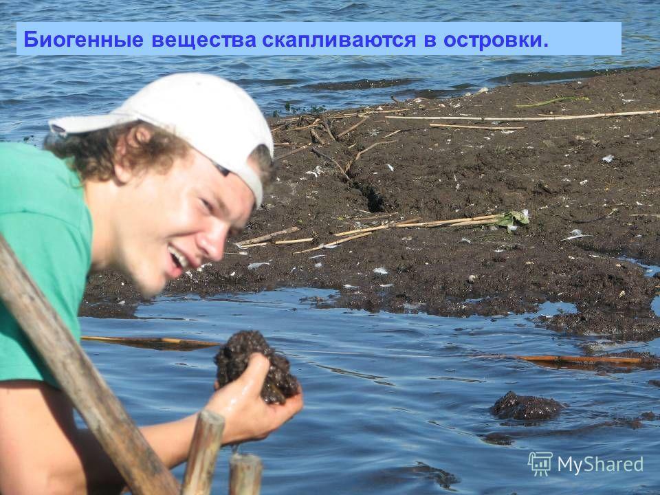 Биогенные вещества скапливаются в островки.