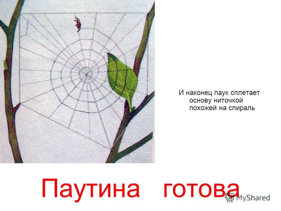 Паутина готова И наконец паук сплетает основу ниточкой похожей на спираль