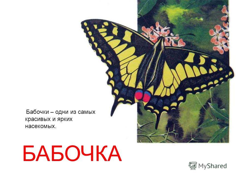 Бабочки – одни из самых красивых и ярких насекомых. БАБОЧКА Бабочки – одни из самых красивых и ярких насекомых. Бабочка