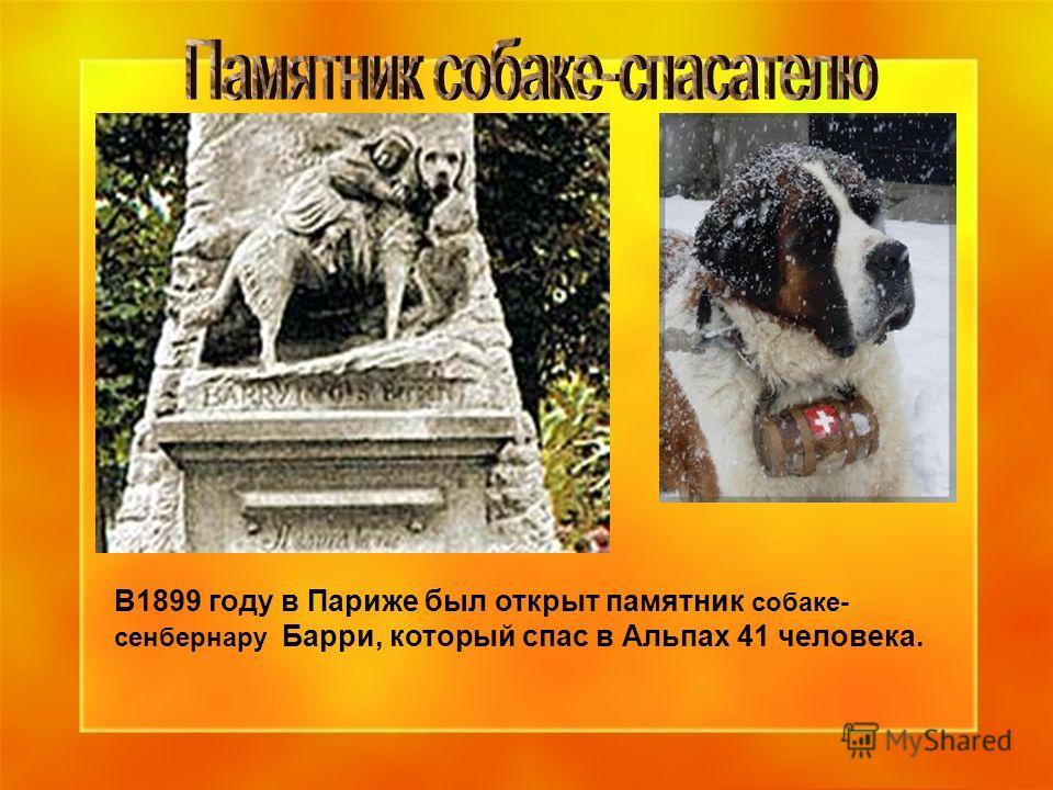 В1899 году в Париже был открыт памятник собаке- сенбернару Барри, который спас в Альпах 41 человека.