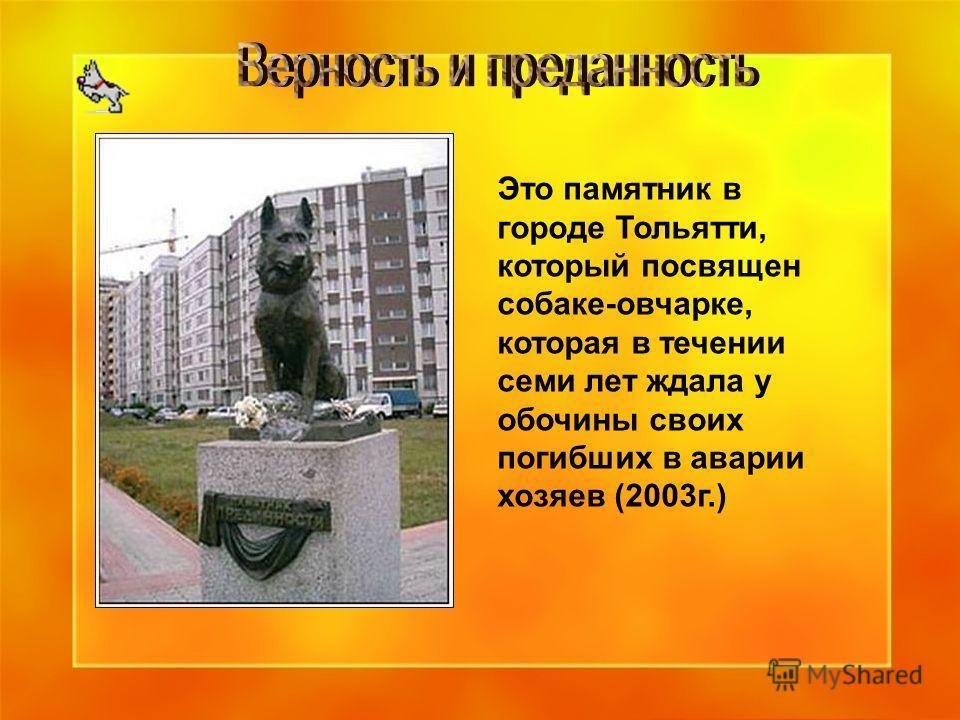 Это памятник в городе Тольятти, который посвящен собаке-овчарке, которая в течении семи лет ждала у обочины своих погибших в аварии хозяев (2003г.)