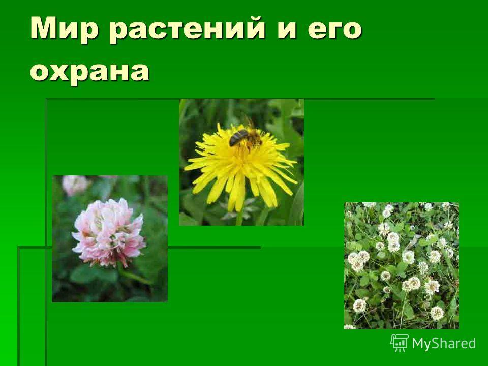 Мир растений и его охрана