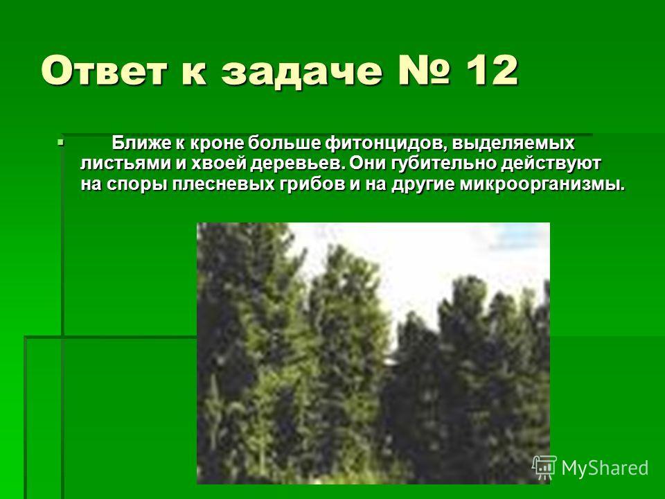 Ответ к задаче 12 Ближе к кроне больше фитонцидов, выделяемых листьями и хвоей деревьев. Они губительно действуют на споры плесневых грибов и на другие микроорганизмы. Ближе к кроне больше фитонцидов, выделяемых листьями и хвоей деревьев. Они губител