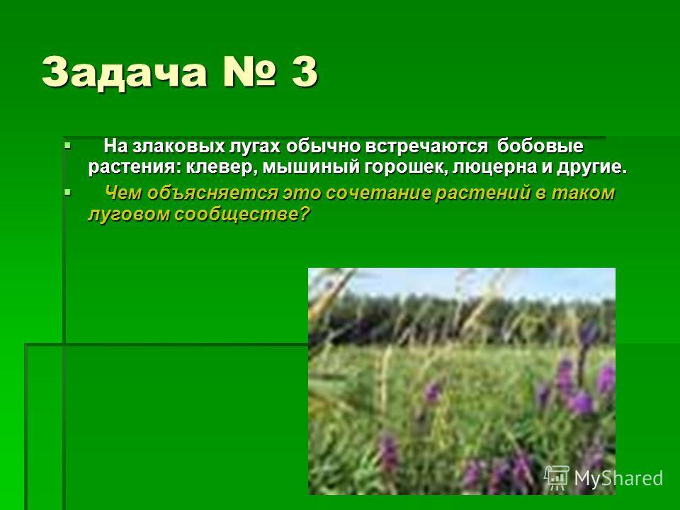 Задача 3 На злаковых лугах обычно встречаются бобовые растения: клевер, мышиный горошек, люцерна и другие. На злаковых лугах обычно встречаются бобовые растения: клевер, мышиный горошек, люцерна и другие. Чем объясняется это сочетание растений в тако