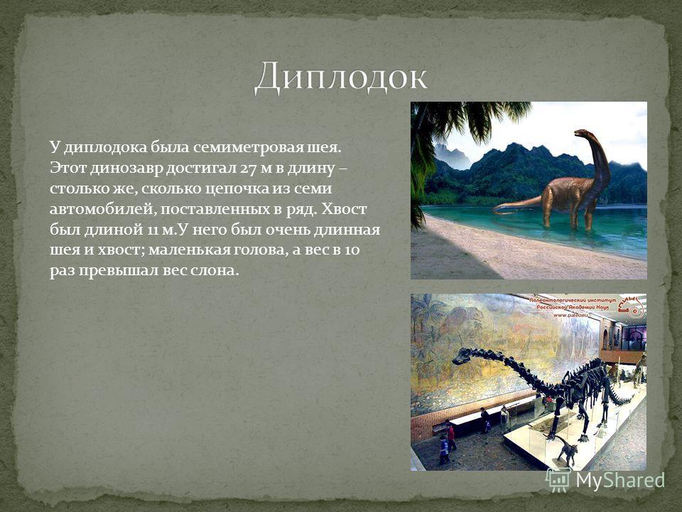 У диплодока была семиметровая шея. Этот динозавр достигал 27 м в длину – столько же, сколько цепочка из семи автомобилей, поставленных в ряд. Хвост был длиной 11 м.У него был очень длинная шея и хвост; маленькая голова, а вес в 10 раз превышал вес сл