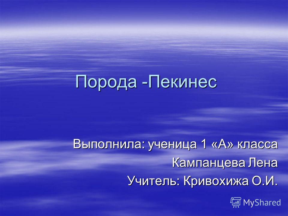 Порода -Пекинес Выполнила: ученица 1 «А» класса Кампанцева Лена Учитель: Кривохижа О.И.