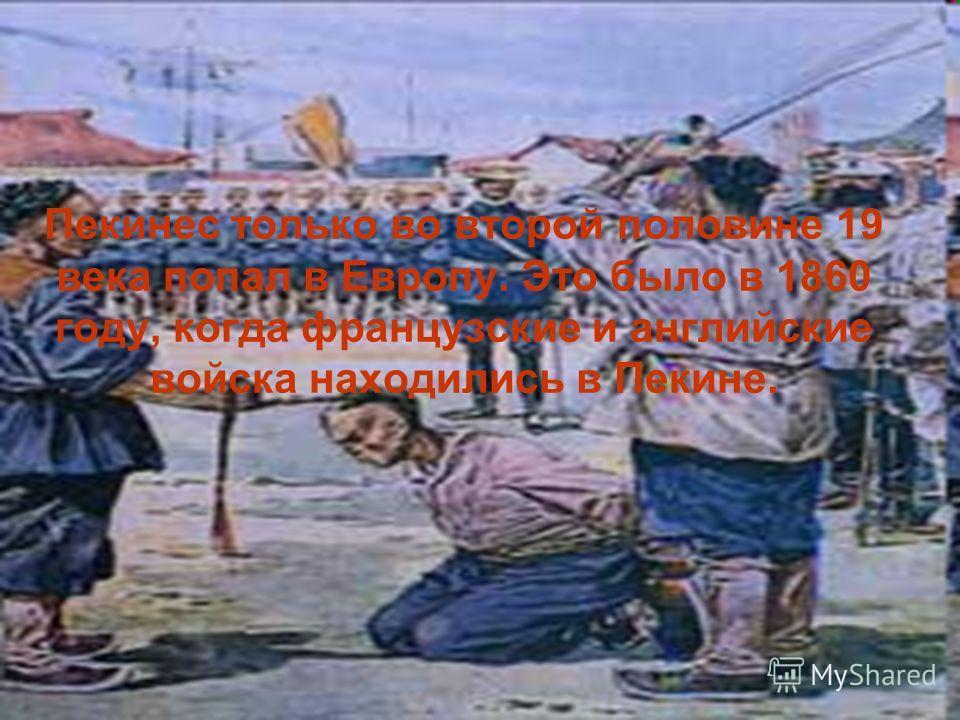Пекинес только во второй половине 19 века попал в Европу. Это было в 1860 году, когда французские и английские войска находились в Пекине.