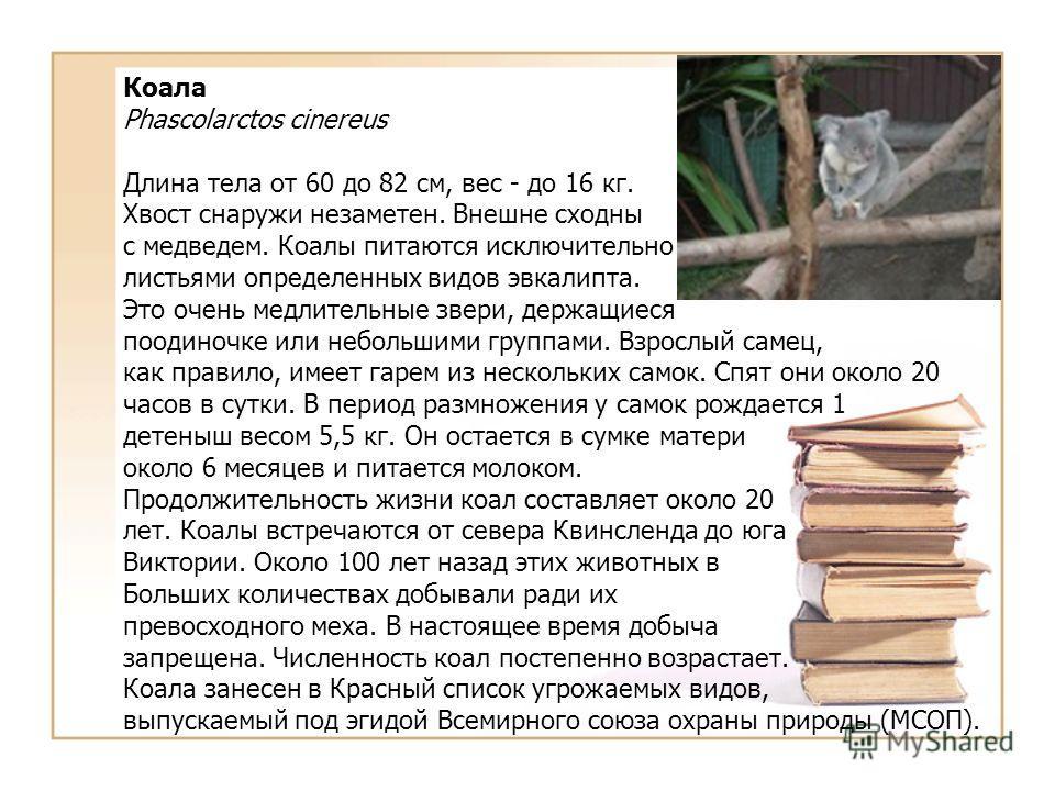 Коала Phascolarctos cinereus Длина тела от 60 до 82 см, вес - до 16 кг. Хвост снаружи незаметен. Внешне сходны с медведем. Коалы питаются исключительно листьями определенных видов эвкалипта. Это очень медлительные звери, держащиеся поодиночке или неб