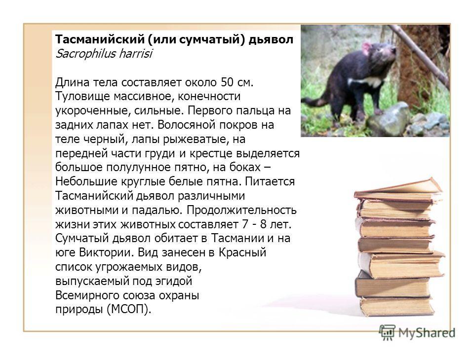 Тасманийский (или сумчатый) дьявол Sacrophilus harrisi Длина тела составляет около 50 см. Туловище массивное, конечности укороченные, сильные. Первого пальца на задних лапах нет. Волосяной покров на теле черный, лапы рыжеватые, на передней части груд