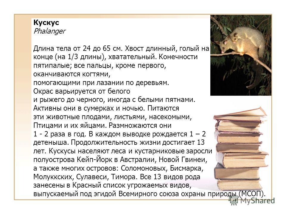 Кускус Phalanger Длина тела от 24 до 65 см. Хвост длинный, голый на конце (на 1/3 длины), хватательный. Конечности пятипалые; все пальцы, кроме первого, оканчиваются когтями, помогающими при лазании по деревьям. Окрас варьируется от белого и рыжего д