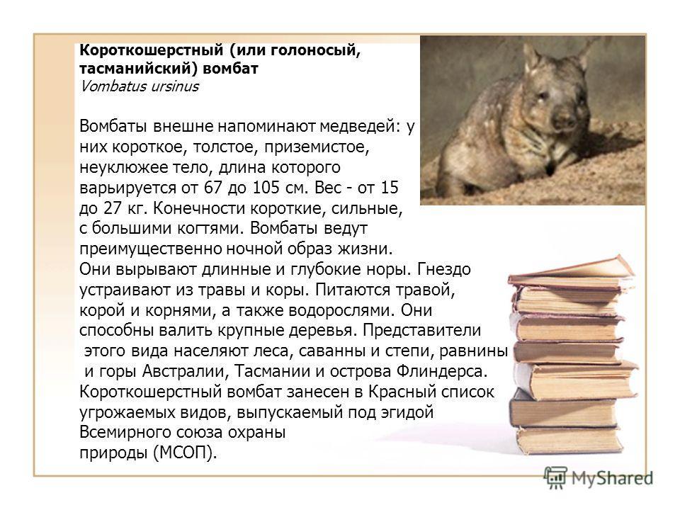 Короткошерстный (или голоносый, тасманийский) вомбат Vombatus ursinus Вомбаты внешне напоминают медведей: у них короткое, толстое, приземистое, неуклюжее тело, длина которого варьируется от 67 до 105 см. Вес - от 15 до 27 кг. Конечности короткие, сил