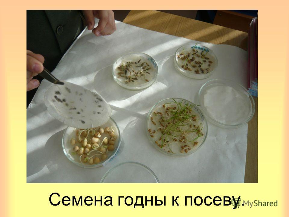 Семена годны к посеву.