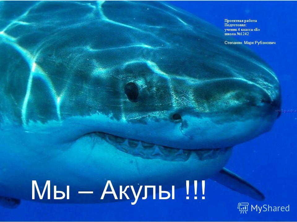 Мы – Акулы !!! Проектная работа Подготовил: ученик 4 класса «Б» школа 1242 Степанян Марк Рубэнович