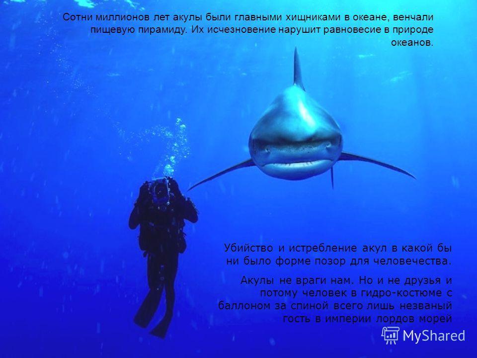 . Сотни миллионов лет акулы были главными хищниками в океане, венчали пищевую пирамиду. Их исчезновение нарушит равновесие в природе океанов. Убийство и истребление акул в какой бы ни было форме позор для человечества. Акулы не враги нам. Но и не дру