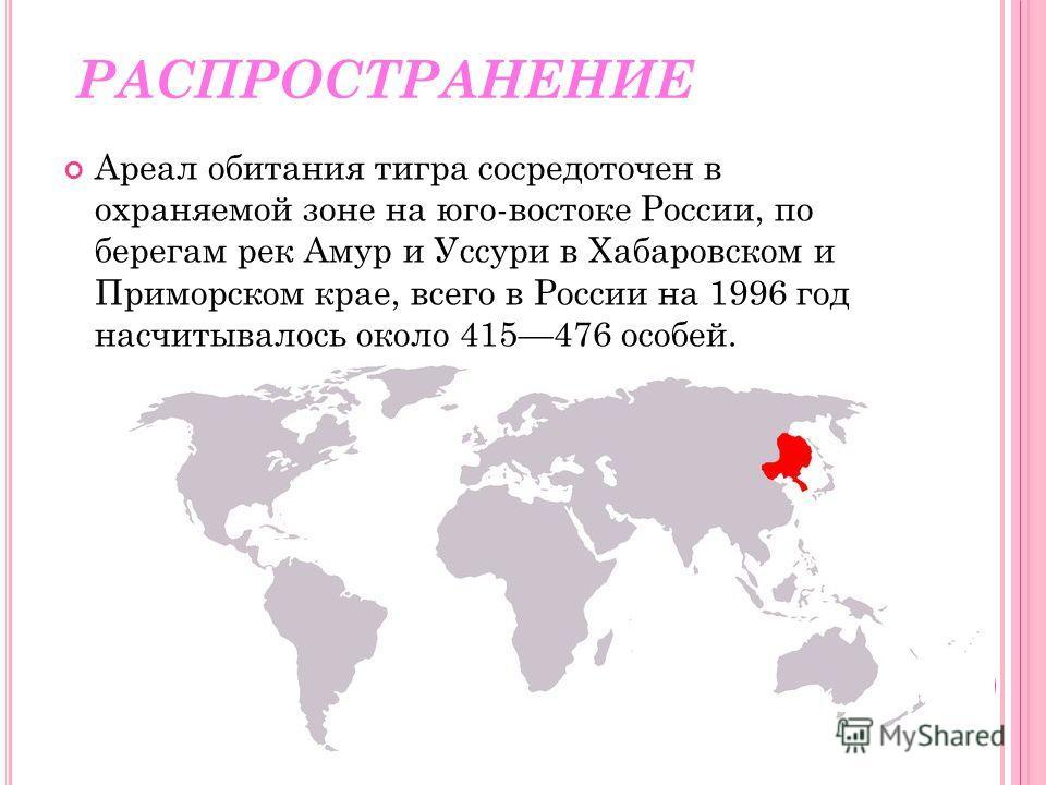 РАСПРОСТРАНЕНИЕ Ареал обитания тигра сосредоточен в охраняемой зоне на юго-востоке России, по берегам рек Амур и Уссури в Хабаровском и Приморском крае, всего в России на 1996 год насчитывалось около 415476 особей.