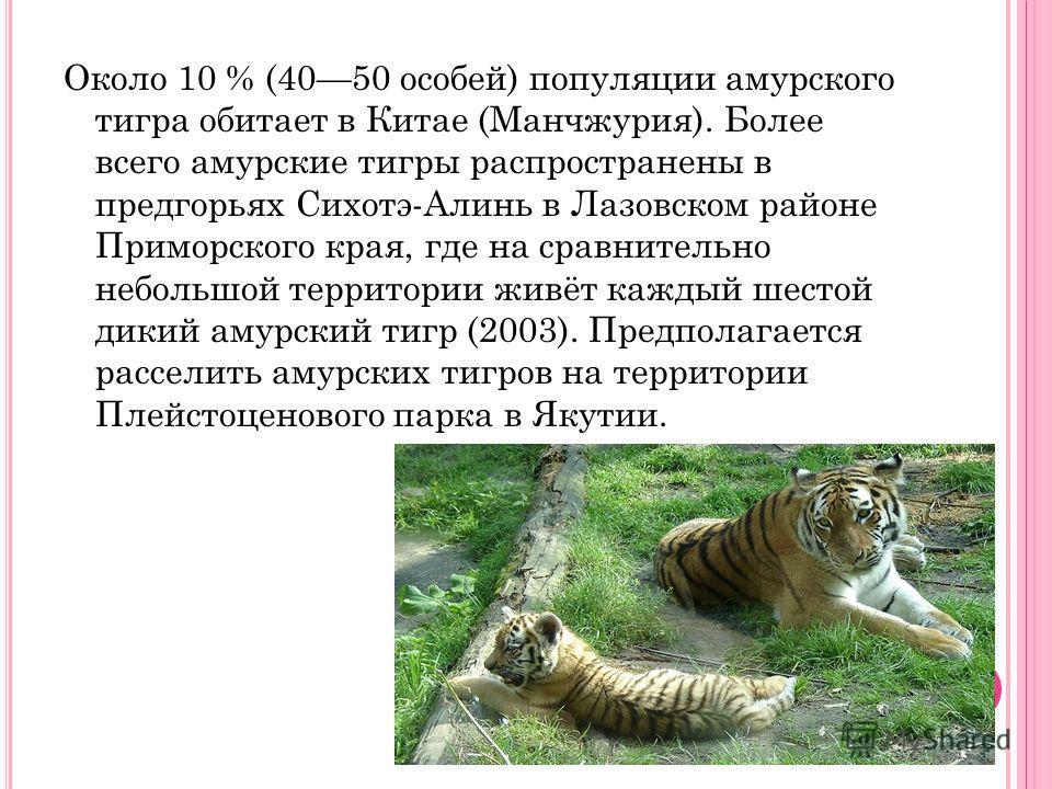 Около 10 % (4050 особей) популяции амурского тигра обитает в Китае (Манчжурия). Более всего амурские тигры распространены в предгорьях Сихотэ-Алинь в Лазовском районе Приморского края, где на сравнительно небольшой территории живёт каждый шестой дики