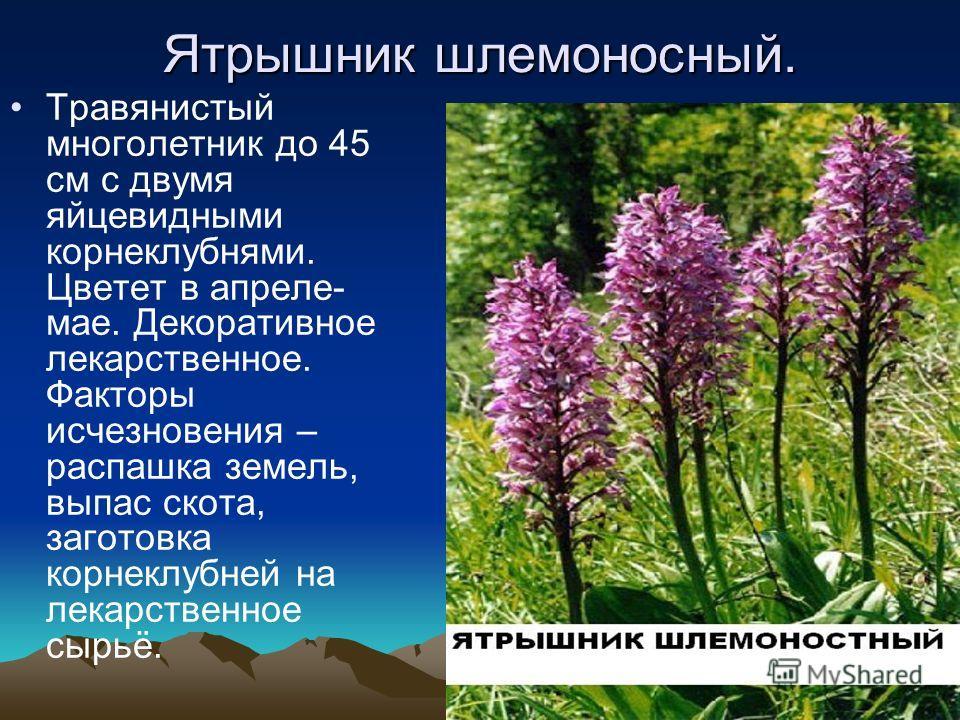 Пион тонколистный. Травянистое многолетнее растение. Цветет в апреле-мае. Медонос, декоративное, ядовитое. Факторы исчезновения – освоение степей под с/х угодья, выпас скота, сбор на букеты.