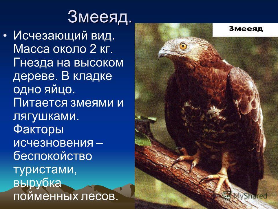 В начале века был представлен двумя подвидами: европейским и кавказским. Кавказский подвид исчез, и в настоящее время ведётся создание вольных стад гибридной формы зубробизонов. Крупное животное с длиной тела до 3,5 м и высотой в холке до 2 м. Передн