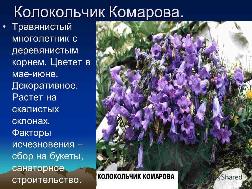 Белоцветник летний. Травянистое многолетнее луковичное растение, цветет в апреле, начале мая. Декоративное лекарственное. Растет на влажных болотистых лугах. Численность сокращается особенно на Черноморском побережье.
