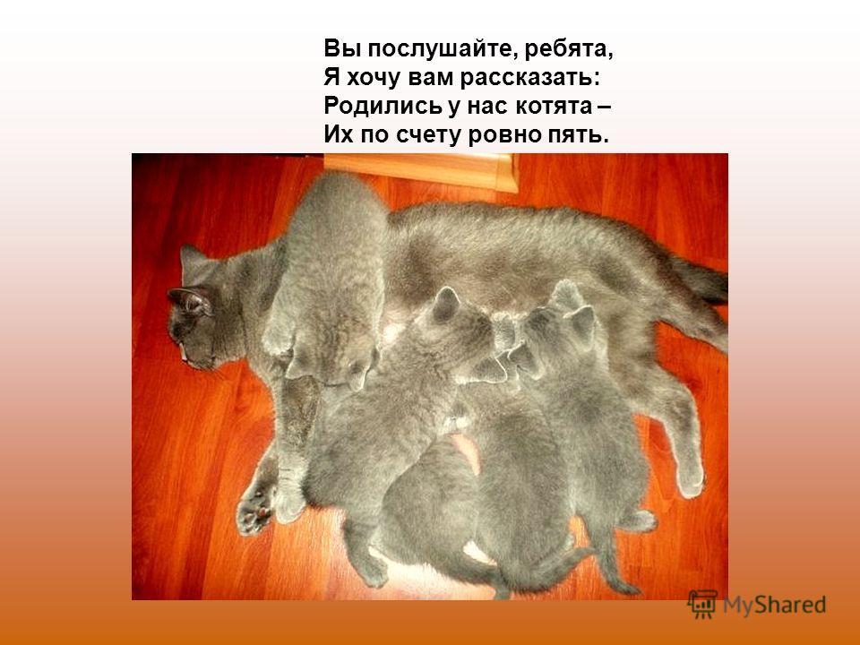 Вы послушайте, ребята, Я хочу вам рассказать: Родились у нас котята – Их по счету ровно пять.