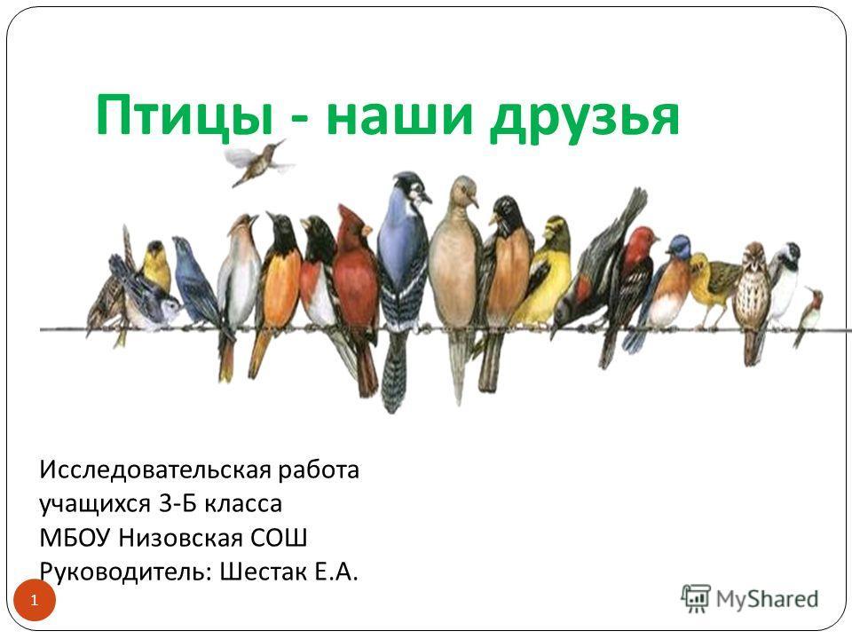 Презентация на тему Птицы наши друзья Исследовательская  1 Птицы наши друзья 1 Исследовательская работа учащихся 3 Б класса МБОУ Низовская СОШ Руководитель Шестак Е А