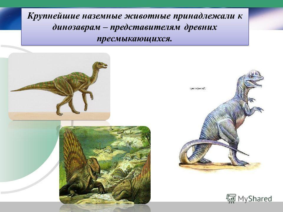 Крупнейшие наземные животные принадлежали к динозаврам – представителям древних пресмыкающихся.