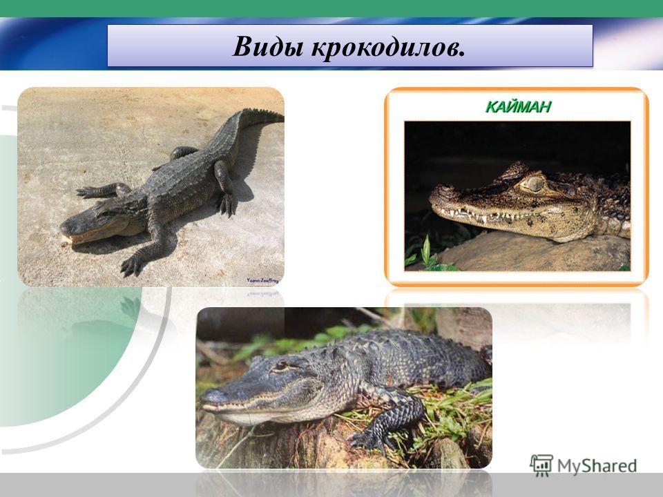 Виды крокодилов.