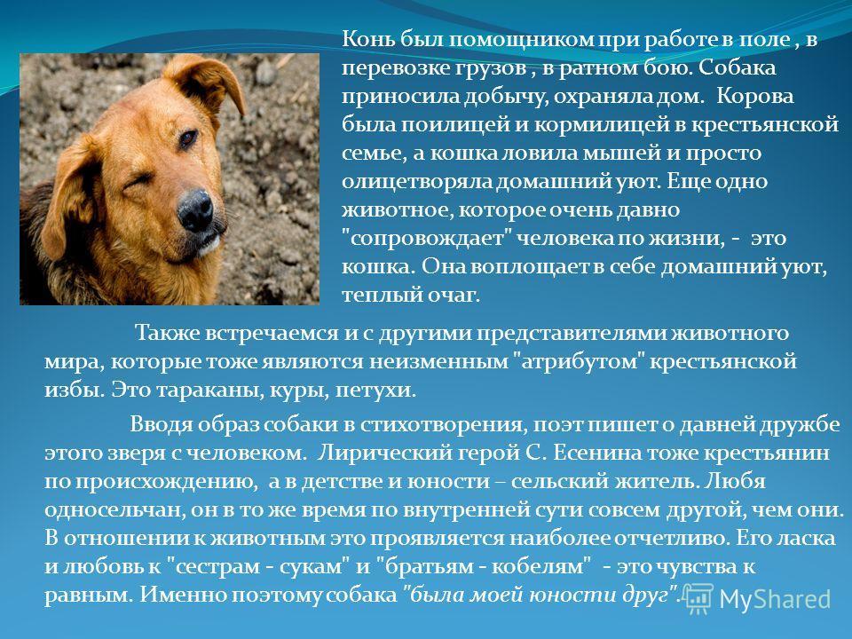 Также встречаемся и с другими представителями животного мира, которые тоже являются неизменным