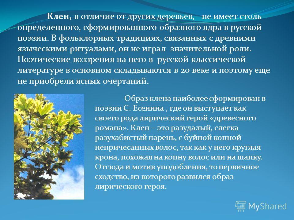 Клен, в отличие от других деревьев, не имеет столь определенного, сформированного образного ядра в русской поэзии. В фольклорных традициях, связанных с древними языческими ритуалами, он не играл значительной роли. Поэтические воззрения на него в русс
