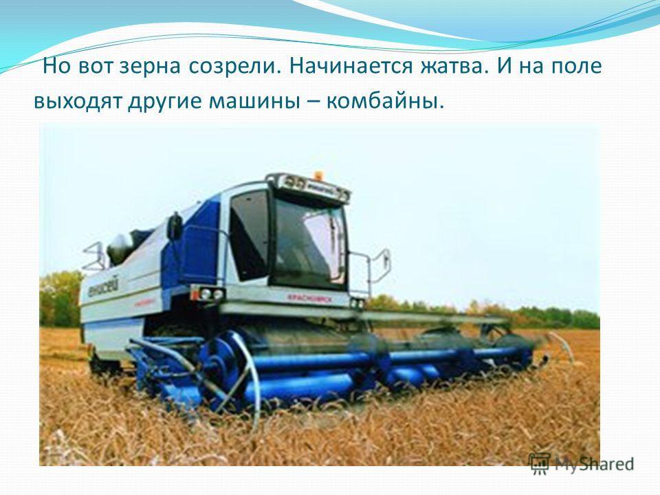 Но вот зерна созрели. Начинается жатва. И на поле выходят другие машины – комбайны.