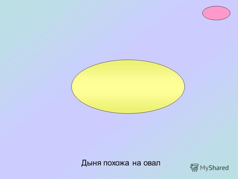 Яйцо имеет форму овала