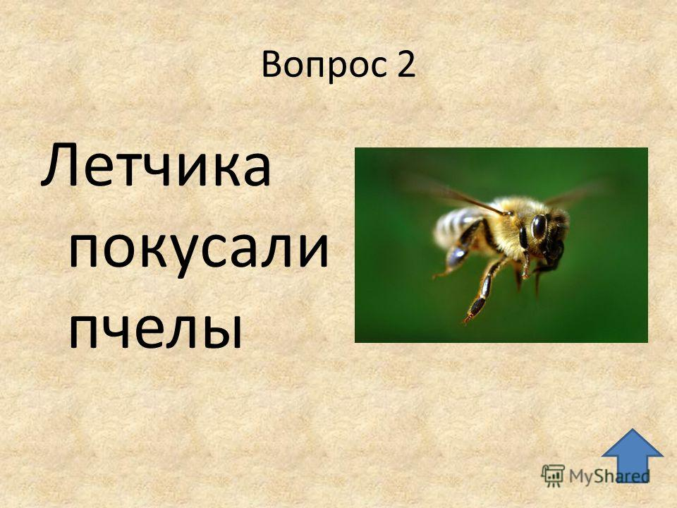Вопрос 2 Летчика покусали пчелы