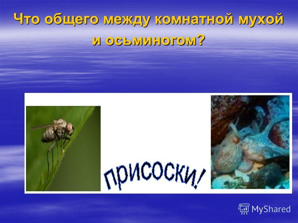 Что общего между комнатной мухой и осьминогом?