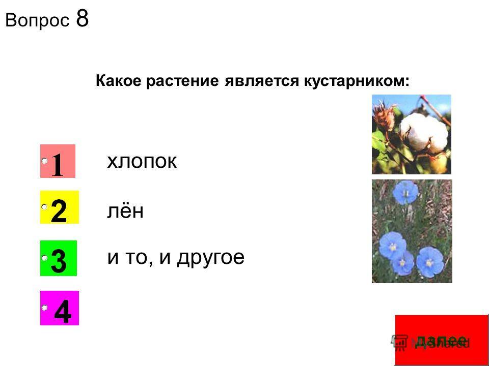 Вопрос 8 1 Какое растение является кустарником: хлопок лён и то, и другое