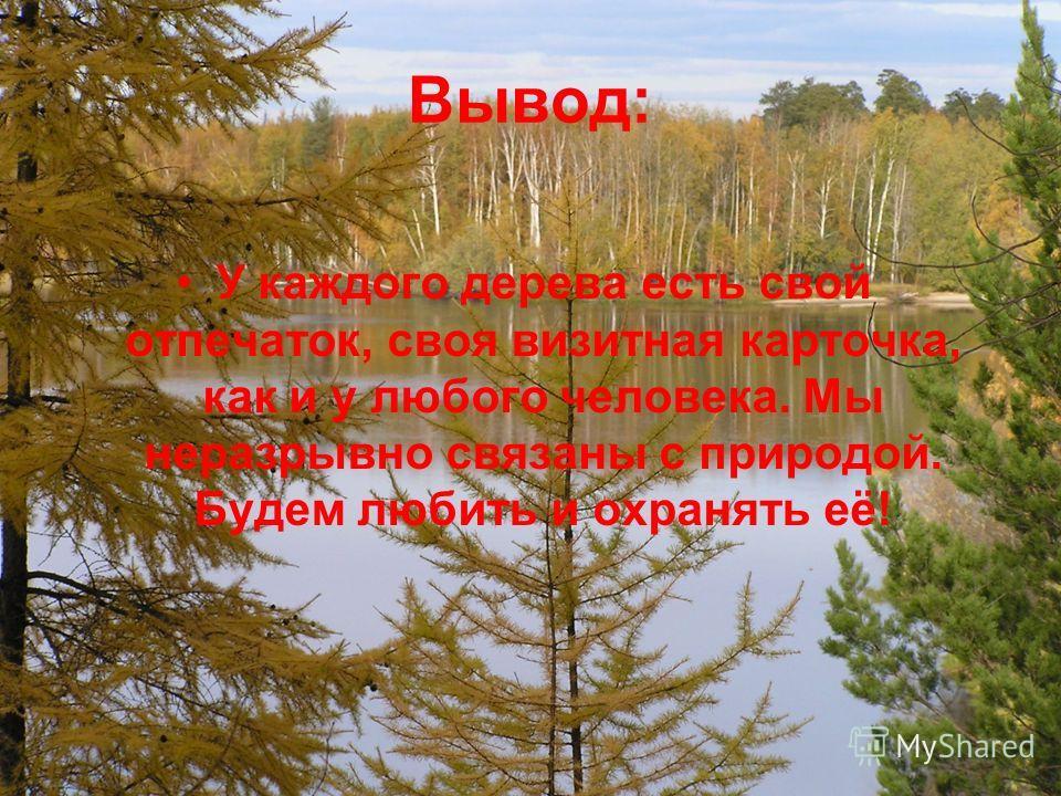 Вывод: У каждого дерева есть свой отпечаток, своя визитная карточка, как и у любого человека. Мы неразрывно связаны с природой. Будем любить и охранять её!