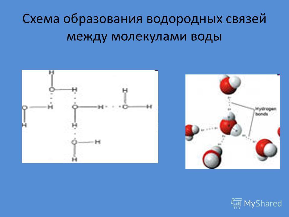 Схема образования водородных связей между молекулами воды