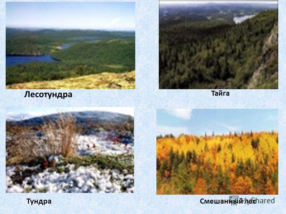 Смешанный лес Тайга Лесотундра Тундра