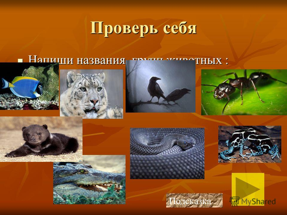 К этому виду относятся ящерицы, змеи, черепахи и крокодилы. Кожа защищена панцирем или чешуйками. Своё название они получили за способ передвижения, их тело прижимается к земле, как бы смыкаясь с ней отсюда и название – пресмыкающиеся. К этому виду о