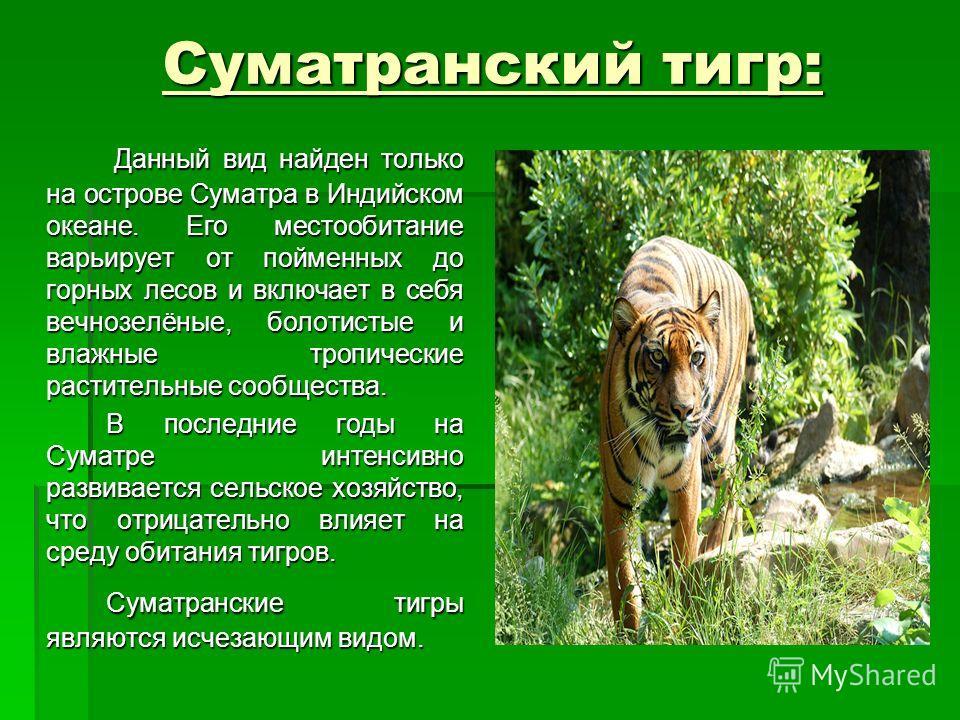 Суматранский тигр: Данный вид найден только на острове Суматра в Индийском океане. Его местообитание варьирует от пойменных до горных лесов и включает в себя вечнозелёные, болотистые и влажные тропические растительные сообщества. Данный вид найден то