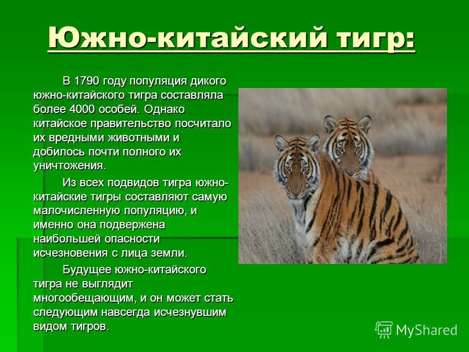 Южно-китайский тигр: Южно-китайский тигр: В 1790 году популяция дикого южно-китайского тигра составляла более 4000 особей. Однако китайское правительство посчитало их вредными животными и добилось почти полного их уничтожения. Из всех подвидов тигра